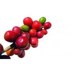 El origen del café y algunas curiosidades image