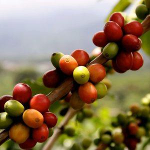 El origen del café: la leyenda de la cabra loca image
